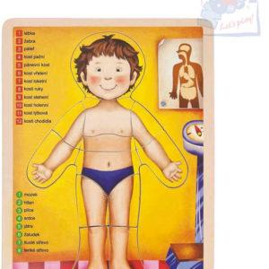 WOODY DŘEVO Puzzle oboustranné naučná skládačka lidské tělo set 12 dílků